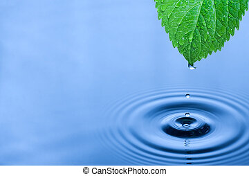 Green leaf water drops - Green leaf with splashing water...