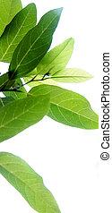 green leaf white background