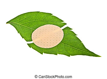Green leaf with adhesive plaster isolated on white background