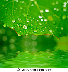 Green leaf with dew - Green leaf with water drops and ...