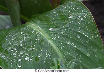 Green leaf with drops of dew