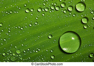 Dew on green leaf with drops of water