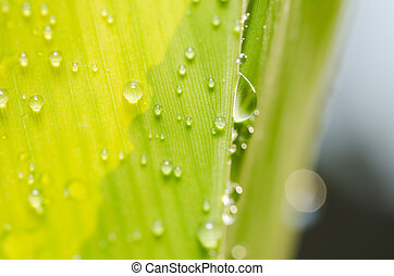 green leaf with drops of water in the nature