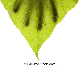 Green leaf with hand