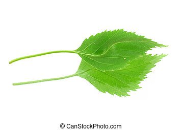 green leaf with its