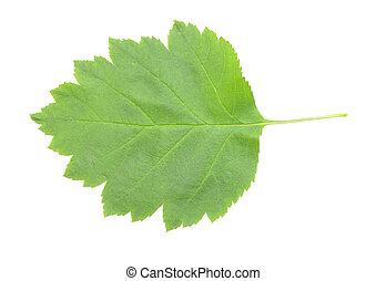 green leaf with shadow