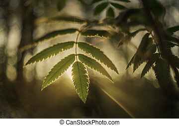 green leaf with sun rays in the forest