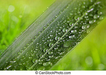 green leaf with water drops on natural sunny background