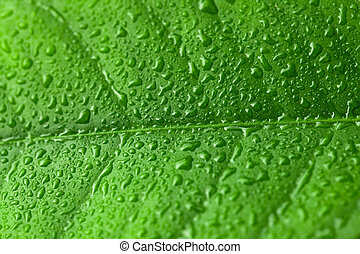 Green leaf with water drops over it