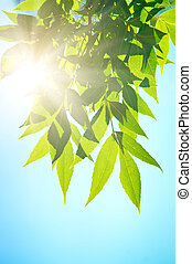 Green leafe in sunny day. On blue sky fone.