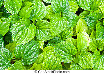 Green leafs background