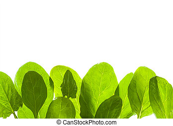 Green leafs isolated background