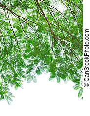 green leafs isolated on white