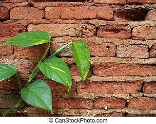 Green leafs on red brocks wall
