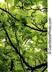 Green leafs on tree