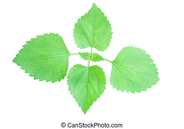 Green leafs on white background