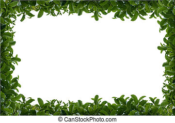 Green leafy hedge frame over a white isolated background...