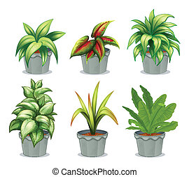 Green leafy plants - Illustration of green leafy plants on a...
