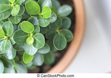 Green leafy plants in pots, viewed from above.