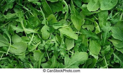 Green Leafy Rocket Salad Rotating - Leafy rocket salad...