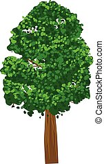 Green leafy tree vector