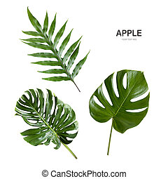 Green leave isolate on white background.