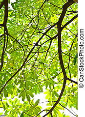 green leave isolated for background