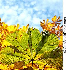 Green leave of chestnut