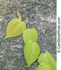 Green leave on wall