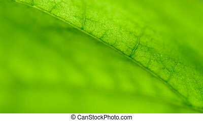 Green leave structure