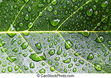 Green leave with water drop