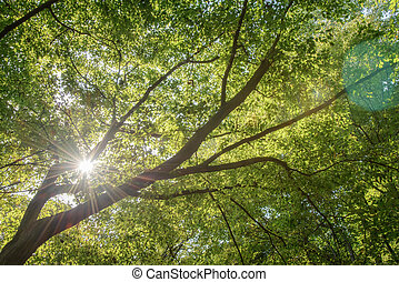 branches with sunshine
