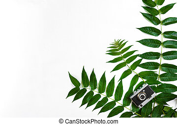 Green leaves and old camera on white background, Summer background. Top view