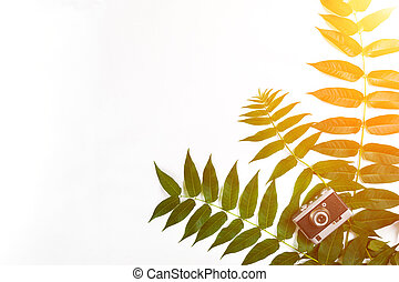 Green leaves and old camera on white background, Summer background. Top view. Sun Flare