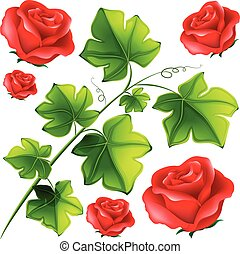 Green leaves and red roses
