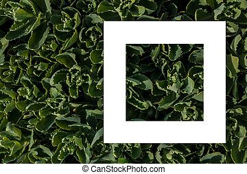 green leaves as a backdrop and a white sheet of paper for the label