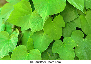 Green leaves background in natural colors.