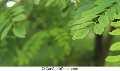 Green leaves background in park