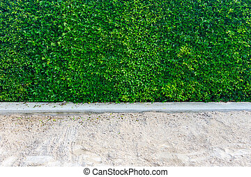 Green Leaves background of Ficus annulata or Banyan Tree Leaf and sand
