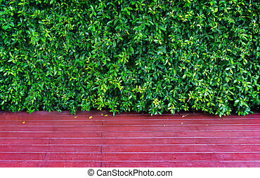 Green Leaves background of Ficus annulata or Banyan Tree Leaf and Wooden