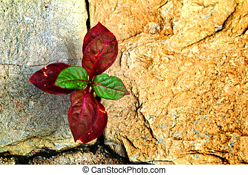 Green leaves background on stone