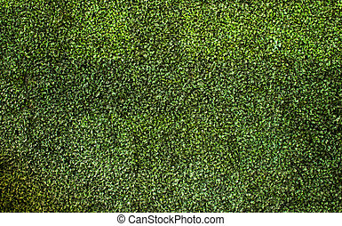 green leaves background, wallpaper
