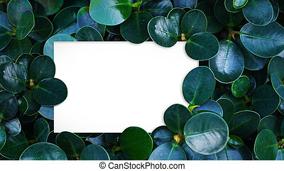 Green leaves background. White space