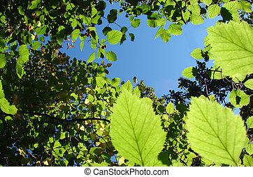 Green leaves & berrys background - Green leaves &hawtorn ...