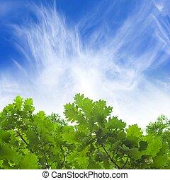 Green leaves, blue sky