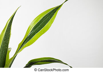 Green Leaves Border For An Angle Of Page on White Background