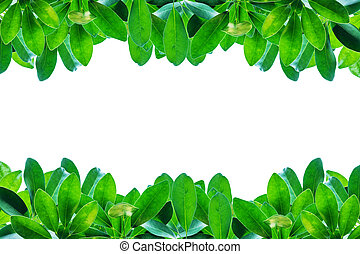Green leaves border isolated on white background.