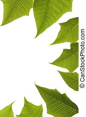 green leaves border over white background