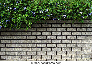 Green Leaves Bush on old wall brick background