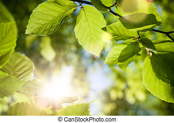 Green leaves closeup with the sun in the blurred background